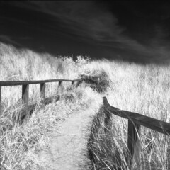 Port Crescent Park IR (scott_z28) Tags: blackandwhite bw motion blur 120 6x6 tlr film beach nature monochrome grass mi mediumformat landscape ir coast sand wind michigan dunes surreal windy hc110 trail infrared epson v600 breeze yashica hoya 635 efke r72 saginawbay dilutionb portcrescent ir820