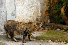 Laranjinha (Luccianna Ferreira) Tags: street brazil cats animal animals brasil cat br saopaulo sopaulo gatos sp gato stray rua alameda animais gatinho gatinhos viralata laranjinha lanaminharua lnaminharua animalderua ruasantoaristides