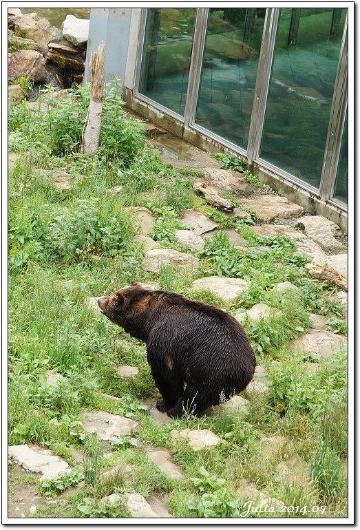 熊牧場 (43)