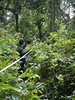 Following the Trail (The Forest Trust) Tags: wood pulp paper tft sustainable indonesia island asia nature forest seedling forestmanagement forestry landscape travel plant plantation local rural