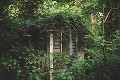 Overgrowth (Tammy Schild) Tags: plants house building nature 35mm woods shed sigma ivy growth