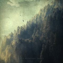tree mountain (Dyrk.Wyst) Tags: italien trees light summer italy painterly blur mountains nature fog composition forest photomanipulation sunrise vintage square landscape outdoors licht mood moody nebel hiking sommer fineart natur noone surreal atmosphere manipulation retro berge valley dreamy alpen minimalism conceptual landschaft wald bäume sonnenaufgang wandern impressionistic conifers tal stimmung firs reise quadratisch tannen composing friedlich romantical malerisch texturized creativephotography tannenwald valmalenco chiesainvalmalenco texturiert photoshelter