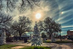 Solar Halo (inlightful) Tags: sun sunny sunshine solar halo solarhalo sky clouds weather outdoor nature park trees winter southwest socorrocounty socorro newmexico christmastree sundog