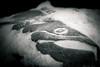 stone cold fish (Christian Collins) Tags: fish stone cold carving plaque sanford mi michigan winter invierno frosty frigid frozen december canoneos5dmarkiv