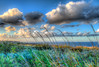 Christmas Eve morn among the reeds (Michael F. Nyiri) Tags: hdr ranchopalosverdes palosverdes palosverdespeninsula southerncalifornia california sunrise clouds cloudscape