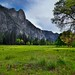 A Meadow to Take in Trees and Nearby Mountain Peaks (Yosemite National Park)