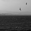 Gabbiani di Capo Colonna - Crotone (pom.angers) Tags: panasonicdmctz10 september 2011 capocolonna crotone calabria marionio mediterraneo italia italy birds seagulls