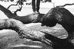 Twisted (spannerino) Tags: chucks nikonf2 35mm wood tree log feet legs low black white vintage filmlives handprocessed scanned dof blackandwhite monochrome analogue analog canon9000f film newzealand people person pov vintagecamera viewpoint outdoor photomic nikonf2photomic nikonf2a beach light