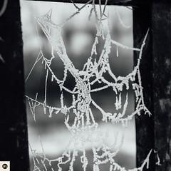 11m311216 (photo & life) Tags: montargis ville city france europe bridge blackandwhite noiretblanc toiledaraignée frosted frozen street streetphotography photography photolife™ jfl sony sonyrx1r sonydscrx1r rx1r rue zeiss carlzeisssonnar35mmf2t 35mm square squareformat squarephotography