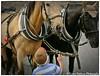 What a big horses (Rio_No) Tags: czech prague staroměstské horses boy streetphotography sidewalk leica digilux2