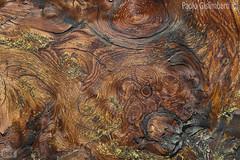 particolare di tronco di larice, detail of a larch's trunk (paolo.gislimberti) Tags: macro alberi trees