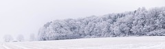 'Portrait of Winter' #winter #landschaft #landscape #germany #Deutschland #nature #natur #pano #panorama #liebe #love #passion #leidenschaft #nopeople #grey#snow #schnee #melancholy #forest #wald #harmony #harmonie #idylle (ppausb87) Tags: winter landschaft landscape germany deutschland nature natur pano panorama liebe love passion leidenschaft nopeople grey snow schnee melancholy forest wald harmony harmonie idylle