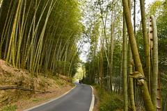 [Bamboo Path] (miltonsun) Tags: bamboo path alishannationalforestrecreationarea chiayicounty taiwan landscape mountains clouds sky bright scenery outdoor road