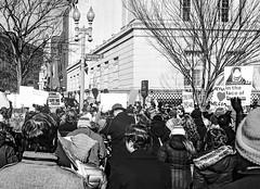 2017.02.04 No Muslim Ban 2, Washington, DC USA 00423