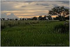 DSC08730PJ_XNV (http://phj.bookfoto.com/) Tags: botswana okavango delta afrique philippe jubeau
