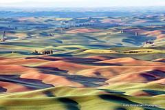 Big Palouse (Gary Grossman) Tags: sunrise landscape dawn washington spring farm wheat farmland pacificnorthwest firstlight wheatfields palouse steptoe southernview bigview steptoebutte garygrossman garygrossmanphotography