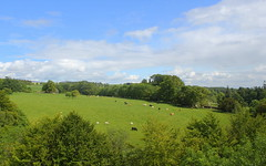 Rolling countryside (Graham`s pics) Tags: travel trees castle history tourism field grass animals landscape scotland scenery cattle cows hill tourist historic fields greenery historicscotland montypythonandtheholygrail stirlingshire doune outlander dounecastle gameofthrones gspiccies