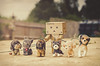 Danbo's Dog Walking Business. (Matt_Briston) Tags: dogs for robot eyes flickr sight friday dando leads sore flickrfriday sightforsoreeyes