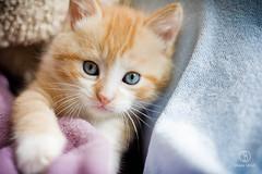 Chtons (Shasta's) Tags: iris light white black color cute eye home animal cat hair chat noir little sweet lumire kitty fluffy yeux moustache kitties maison poil blanc couleur petit mignon doux chton