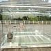 transparent tea house