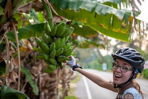 Bananowy raj w Tajlandii