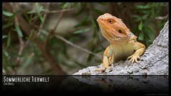 Zoo Basel (Lars Tinner) Tags: animal tiere reptile beast tier brute reptilien bte reptilie bestiau reptilienne
