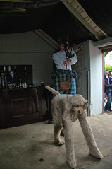 Big Rory and Ochie the Dog at Dalriada Festival, Glenarm Castle (John D McDonald) Tags: dog kilt pipes co northernireland ni piper bagpipes stilts bagpiper ochie ulster countyantrim antrim antrimcoast coantrim glenarm northantrim glensofantrim glenarmcastle eastantrim bigrory ochiethedog antrimantrim dalriadafestival bigroryandochiethedog