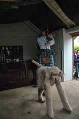 Big Rory and Ochie the Dog at Dalriada Festival, Glenarm Castle (John D McDonald) Tags: dog kilt pipes co northernireland ni piper bagpipes stilts bagpiper ochie ulster countyantrim antrim antrimcoast coantrim glenarm northantrim glensofantrim glenarmcastle eastantrim bigrory ochiethedog antrimantrim dalriadafestival bigroryandochiethedog