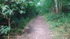 DSC00576 Wenlock Olympian Walk 2015-07-18 - Wenlock Edge path through pines (John PP) Tags: wow shropshire walk miles 50 challenge wenlock olympian marches 2015 muchwenlock ldwa johnpp 180715