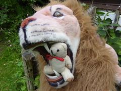 Kirkcudbright Arts Trail 1 (g crawford) Tags: ted art danger teddy craft trail teddies crawford kirkcudbright dangerted artsandcraftstrail