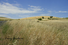 1992 (LucygoodwinPhotography) Tags: hills outdoor landscape field hay south australia canon 7d