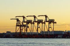 gantry cranes2-1 (whitemt1) Tags: gantrycrane sunset landscape waterfront tokyobay tokyo sky shore bayarea sony ilce7m2