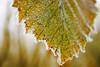 null thucvat20170117 (19) (kangkang300402) Tags: vorst bevroren ijs natuur