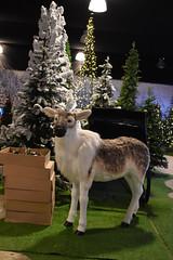 Rendier (zaqina) Tags: kerst kerstboom rendier slee