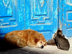 Essaouira, Morocco (Pranav Bhatt) Tags: morocco maroc marocc moroc northafrica africa kingdom kingdomofmorocco almaghrib cat dog doors sleeping snooze sun