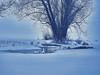 When Life Gets Tough - Wenn das Leben hart wird (W_von_S) Tags: whenlifegetstough wenndaslebenhartwird bergerlacke see lake steinhöring bavaria bayern deutschland germany natur nature winter winterlandschaft wintertime winterpanorama schnee schneelandschaft snow snowlandscape snowscape swan swans schwan schwäne tree baum eis eiskalt ice icy icycold wasser water frost frozen wvons werner 2017 januar january outdoor sony licht light cyan berg
