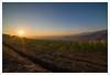 2016 al tramonto (Outlaw Pete 65) Tags: paesaggi landscapes cielo sky sole sun tramonto sunset luce light colline hills campi fields vigneti vineyards nikond600 samyang14mm cellatica lombardia italia