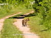 Duke Farms-6142707-2 (myobb (David Lopes)) Tags: dukefarms hillsborough nj newjersey nature olympus em1 omd