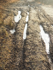 Manual Photos - Batch3-Jan1721 (greenby.nature) Tags: frozen frozenleaf rust rustedcars rustedengine moss frozenpuddles frostywalk sunthroughthetrees grass decayedsleepers