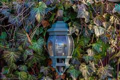 IMGP2866 (michałfarbiszewski) Tags: lampion leafs lamp