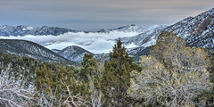 Above the Clouds (magnetic_red) Tags: mountains snow clouds trees alpine altitude above sky pink sunset mtcharleston nevada