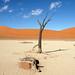 DSC02838 - Namibia 2010 Sossusvlei