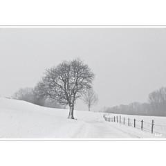 Just follow the road to winter (horstmall) Tags: baum tree arbre winter hiver snow schnee neige zaun fence clôture stacheldraht barbedwire barbelé strase route road schneebedeckt snowcovered enneigé schneefall snowfall neigeux schwäbischealb jurasouabe swabianalps landkreisgöppingen horstmall ziegelhof