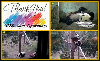 Thank You, SNZ Cam Operators, for your outstanding coverage during Bei's illness & recovery.