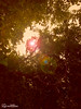 Weekend Clicks (syedyasirwaqarahmed) Tags: landscape morning landscapephotography traditional sharjah arab twotone instagram insta instagood instadaily instatravel instaframe instahappy instaart photography photographer photooftheday photos photoshop lightroom click dubai dubaiphotographer uae art lensflare