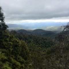 From the lookout - Hartz Mountains National Park