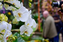 White Orchid (heathernewman) Tags: festival orchid whiteorchid flower garden macro london colourful white green people background closeup february