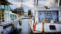 A curious dog (explored 2015/06/07) (Fnikos) Tags: sea dog pet pets dogs water port boats puerto boat mar agua barca outdoor curioso perro curious barcas ports puertos