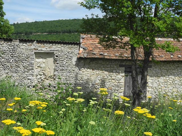 fleurs jaune mas haus provence maison landschaft arbre baum