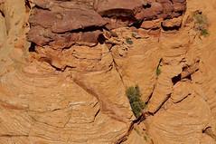Rocky (faungg's photos) Tags: arizona usa southwest nature rock us natural rocky az roadtrip   canyondechellynationalmonument    fourcornersstates